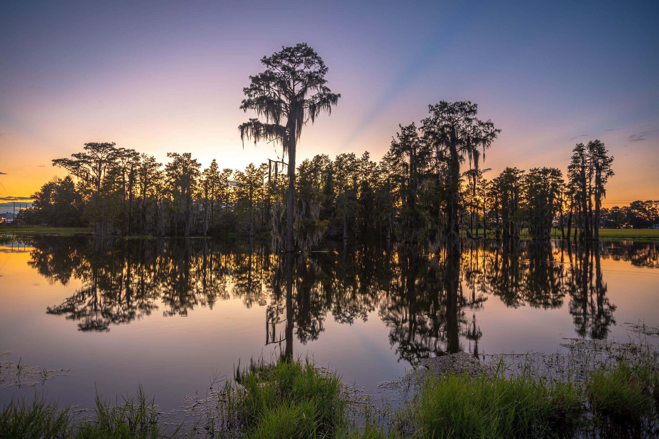 An image of a pretty pond surrounded by grass and filled with cypress trees.