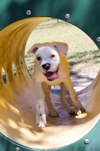Image of dog playing in a dog park tunnel.