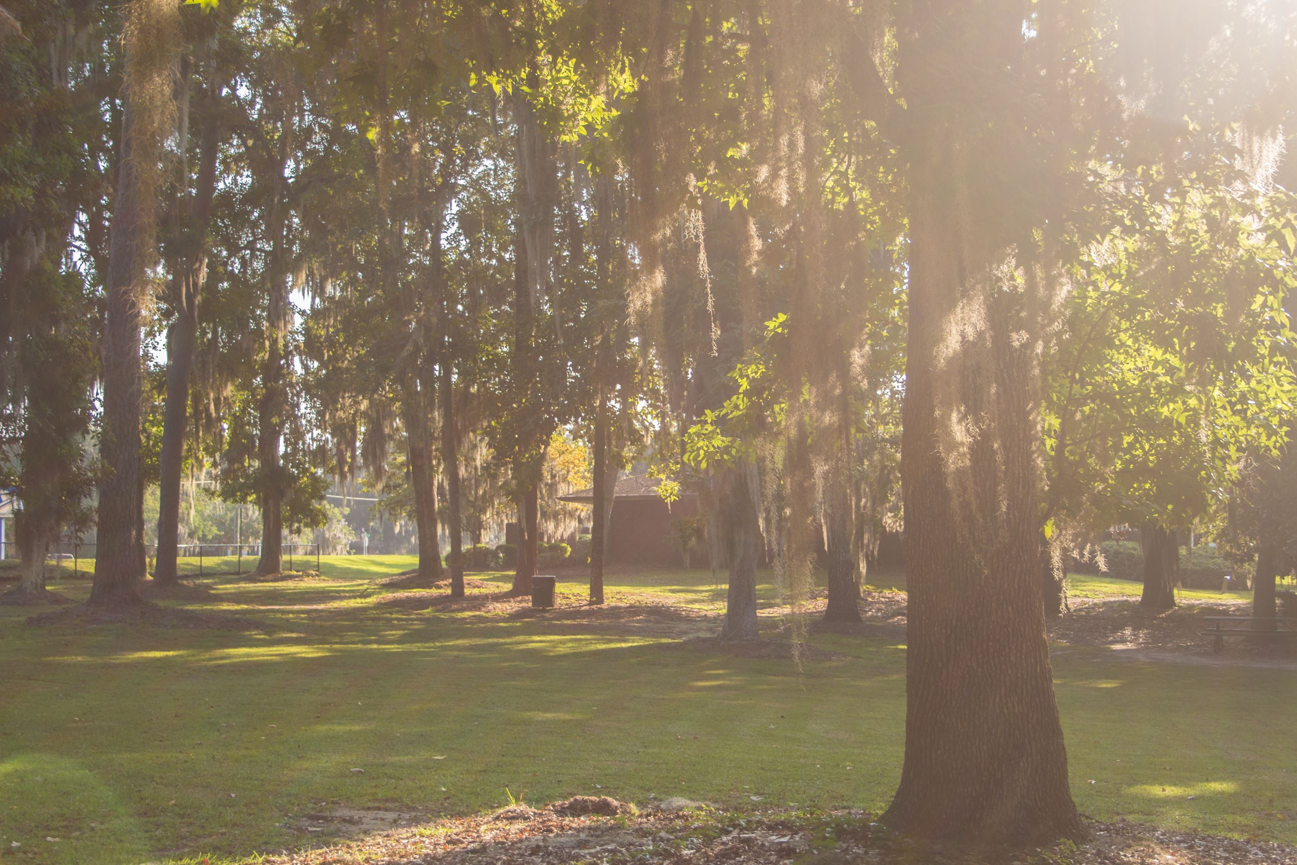 An image of trees in afternoon sun.