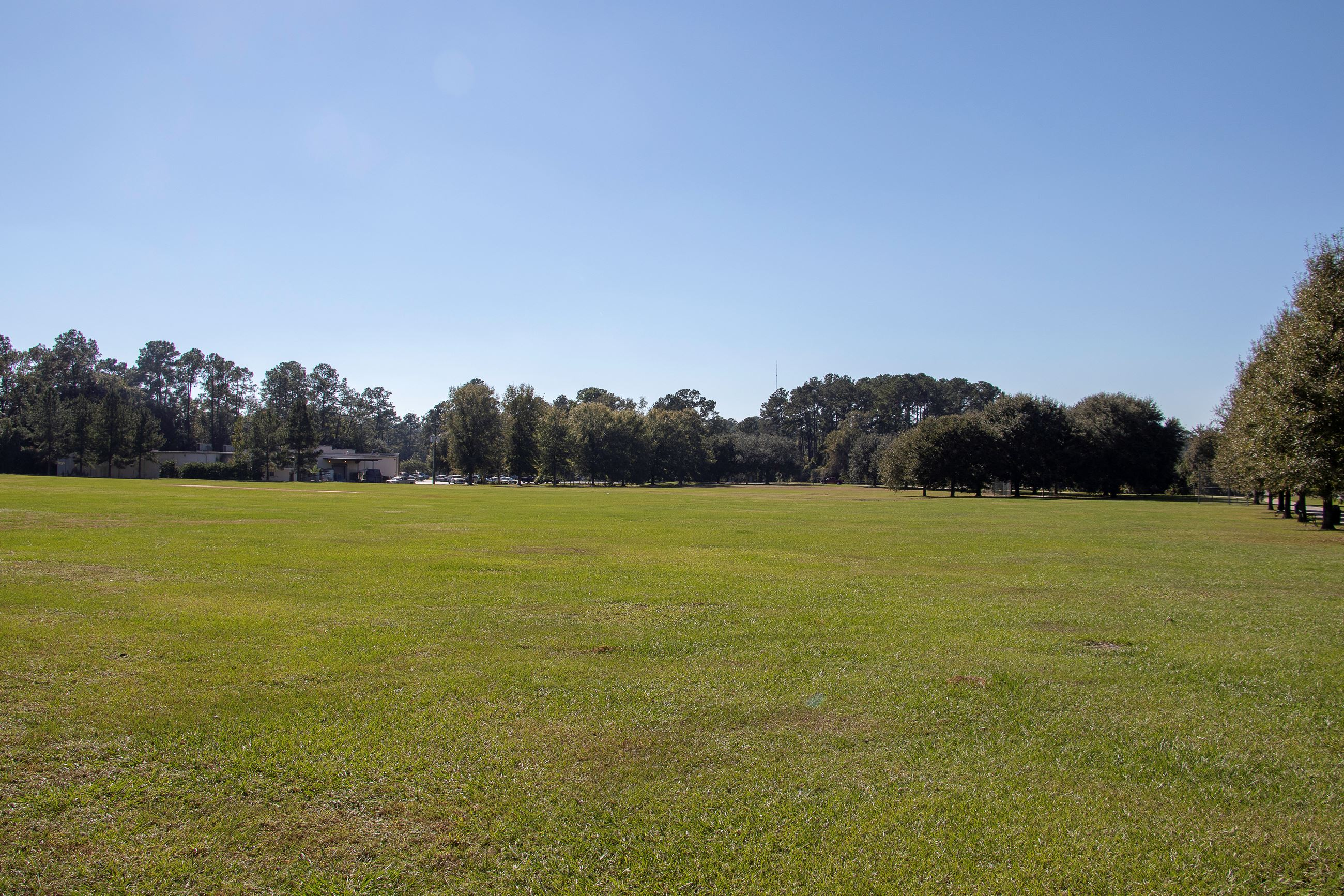 An image of a large grassy field.