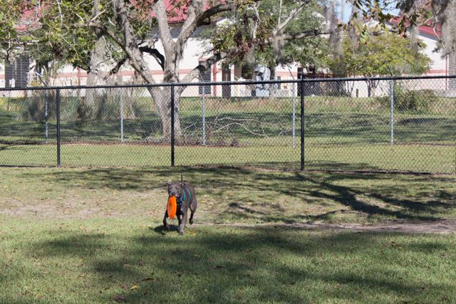 Image of dog playing in dog park.