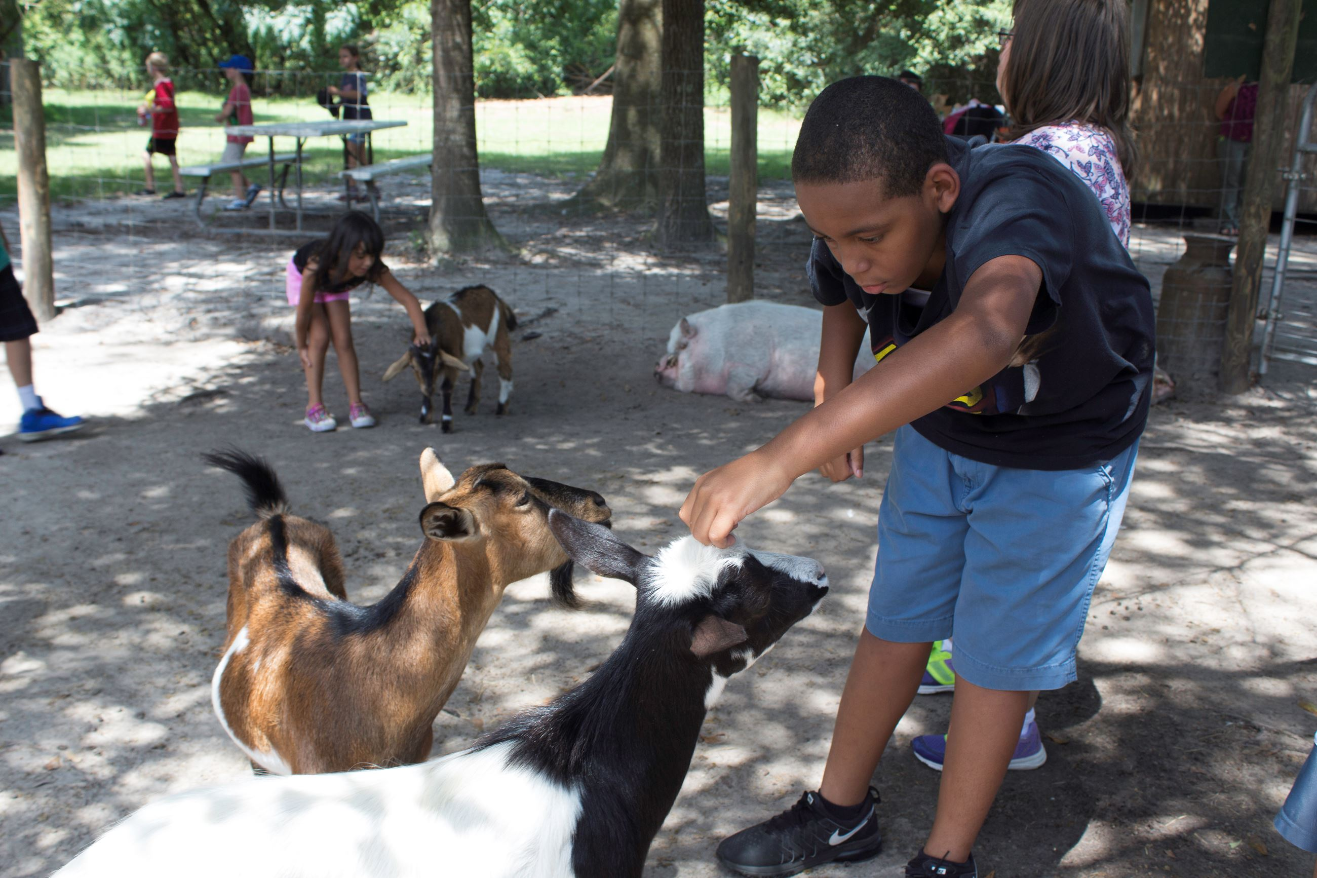 Image of boy feeding a goat.